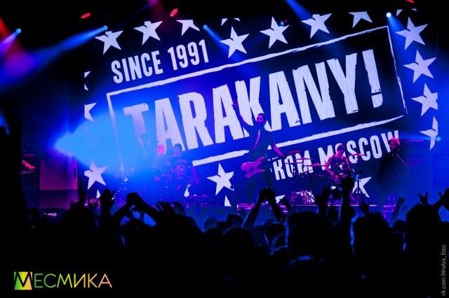 tarakany-6-iz-52
